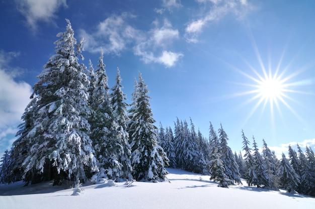 冬の森の晴れた日