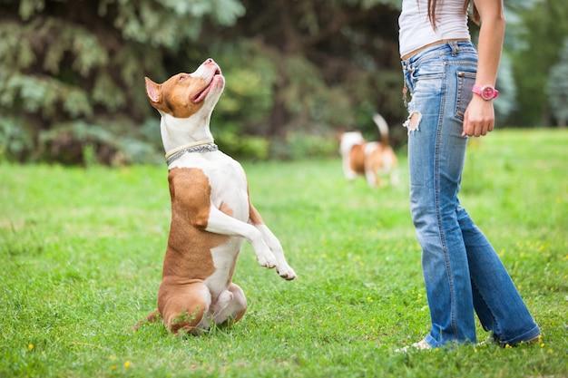 Молодая леди, играя с собакой на открытом воздухе.