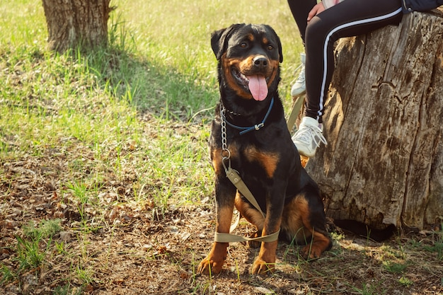 Прогулка с собакой в хвойном лесу