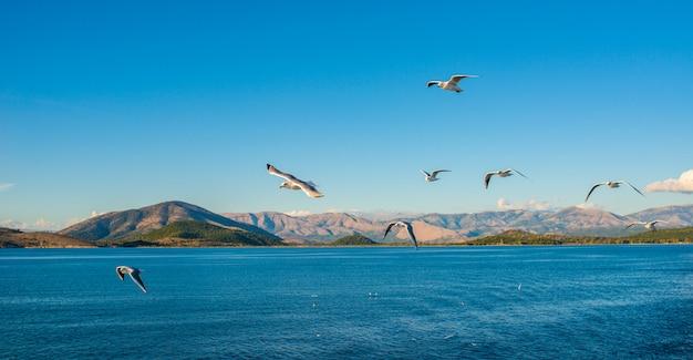 Чайки летают над ионическим морем.