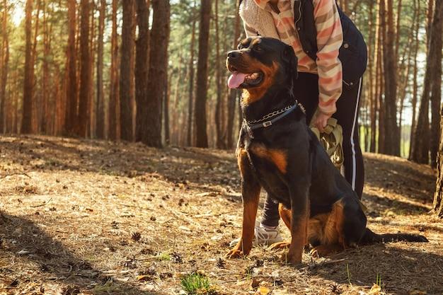 針葉樹の森を犬と一緒に歩く