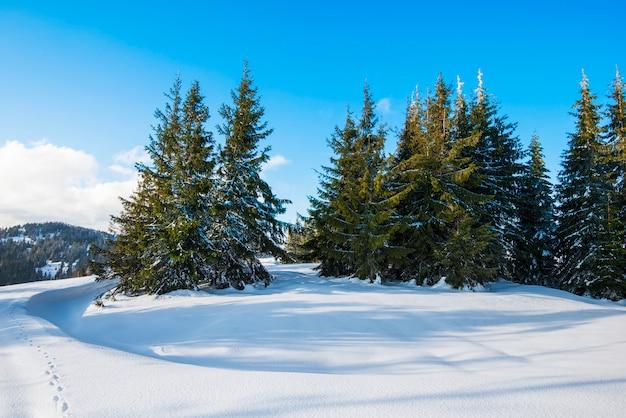 晴れた凍るような冬の日に、青い空と白い雲と冬の雪の吹きだまりの丘の上に成長している雄大な緑のトウヒの木の美しい景色。
