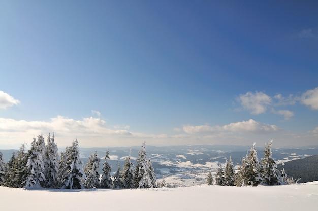 Красивый горный пейзаж с заснеженными деревьями