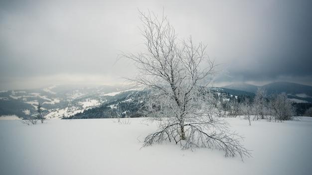 厳しい冬の風景の美しい雪に覆われたモミの木