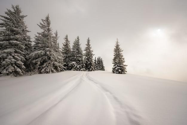 モミの木が美しい雪に覆われた斜面