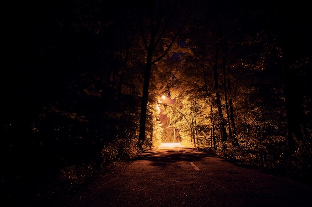 暗い森の夜の道。街路灯私
