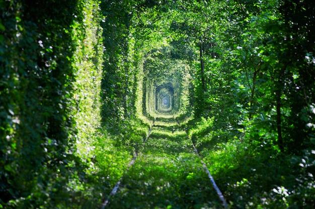 愛の魔法のトンネル、緑の木々と鉄道