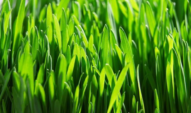 Свежая зеленая трава крупным планом, селективный фокус