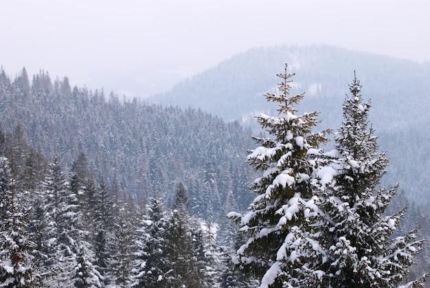 冬の雪のモミの木