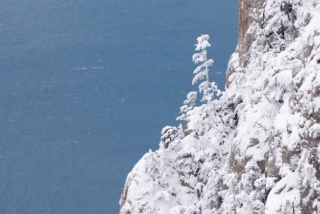冬の山の松の木