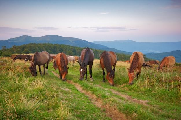 山の中の馬の群れ