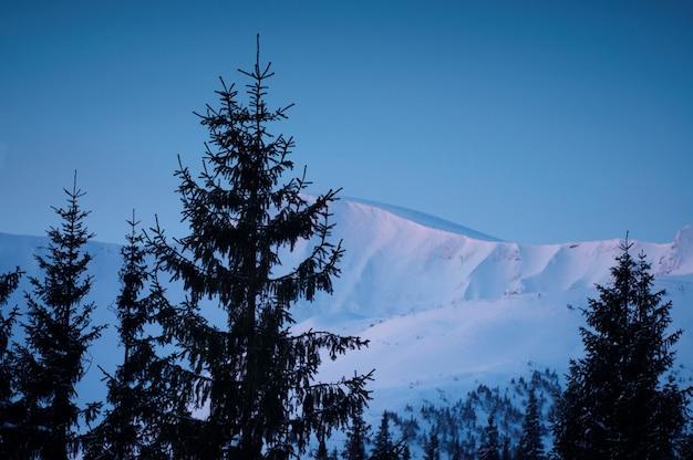 Зимние горы и ели над облаками на рассвете