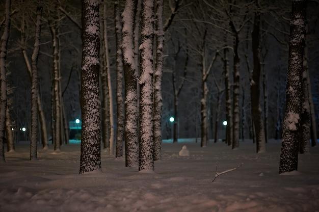 Зимний снег ночной парк