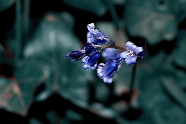 Фиолетовый цветок в объективе смещения наклона, нерезкость предпосылки селективного фокуса