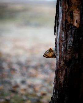 Животный выборочный фокус, выборочный фокус на объекте, размытие фона, во время природы, офигенно, красиво, красиво, фото