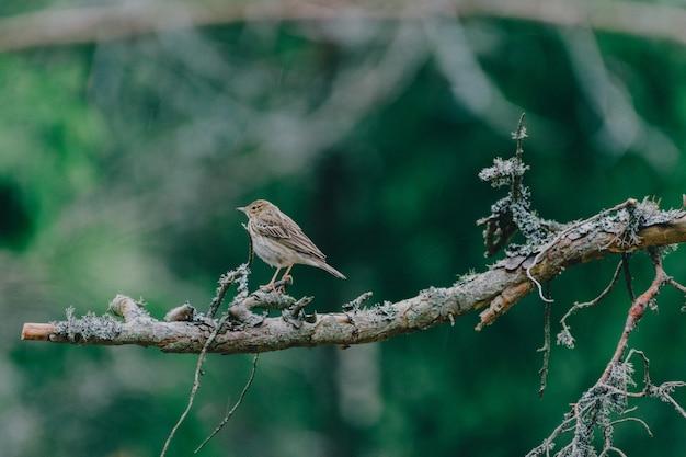 Урожай ретро отфильтрованных птиц на море, природа фон