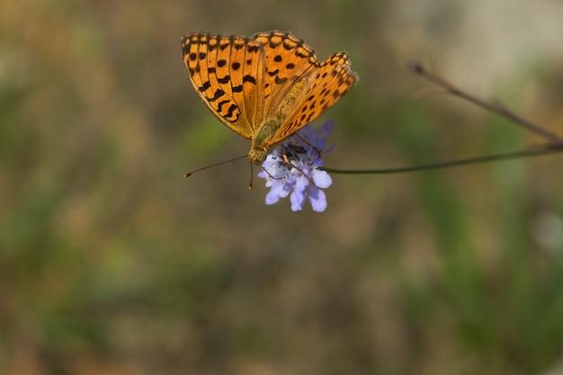 Бабочка на фиолетовом цветке
