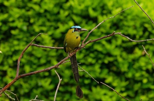 Зеленый питатель в национальном парке яла, шри-ланка.