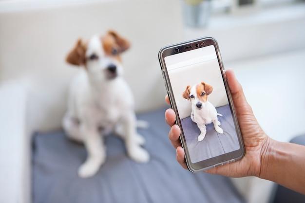 Женщина фотографирует свою собаку с телефоном