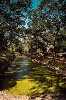 アジアの南東にある自然の川に落ちる葉っぱの木々のある春の森の緑の風景。タイの近代自然とクリーンな環境の生態資源。