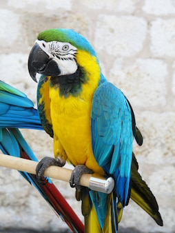 棒の上に立っているカラフルな黄色と青のオウム