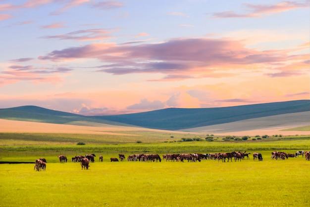 草原に放牧の馬