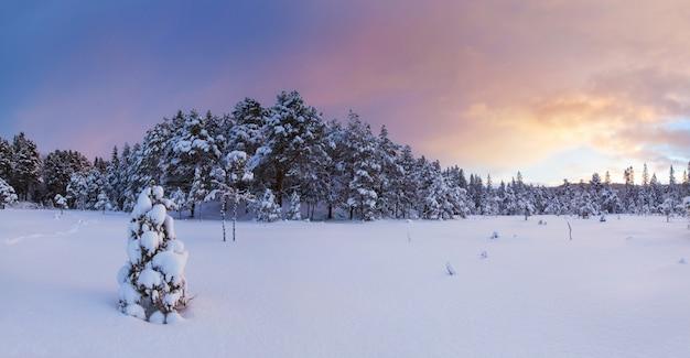 Красивый зимний пейзаж на природе