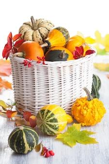 Декоративные тыквы и осенние листья изолированы