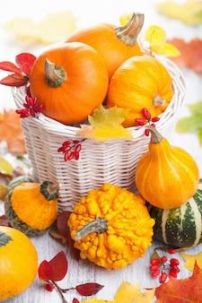 Осенние декоративные тыквы в корзине