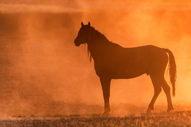 Дикая лошадь или мустанг на лугу на закате