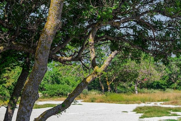 Деревья и высокая трава в кемпинге тонкий мыс, отличное место для отдыха, красивая природа, окрестности курортного города геленджик. черноморское побережье