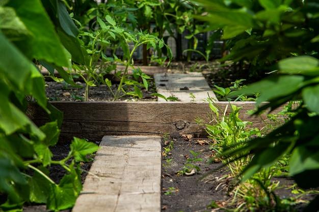 小さな菜園。