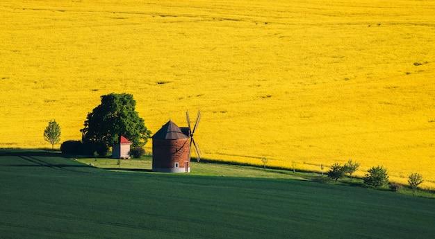 南モラヴィアの風車