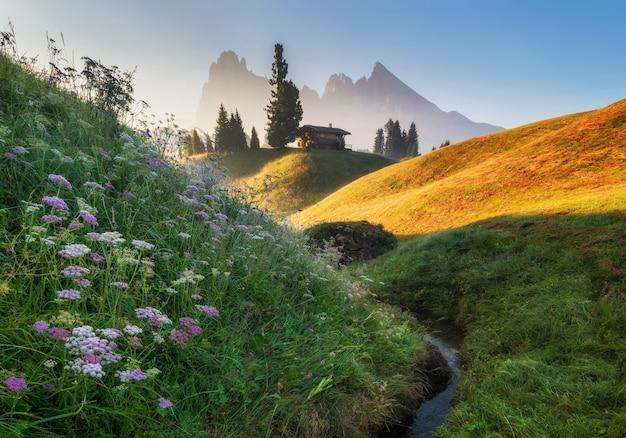 アルプ・ディ・シウシの牧草地、日の出、山、背景