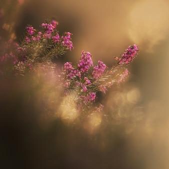 早春の森の中のエリカの植物