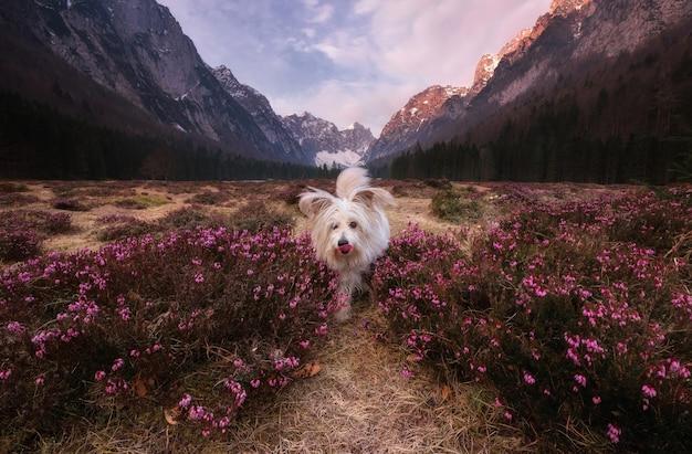 花の間で遊ぶ犬