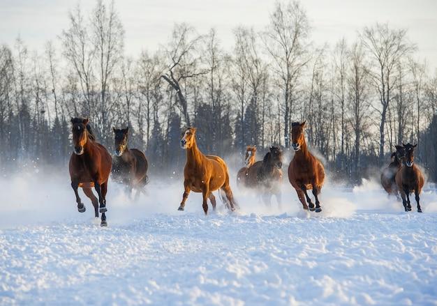 雪の中で走っている馬の群れ