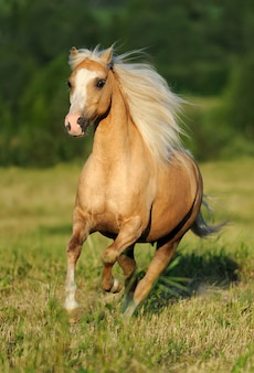 疾走する黄色い馬