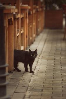 木製のフェンスを覗くかわいいとら子猫