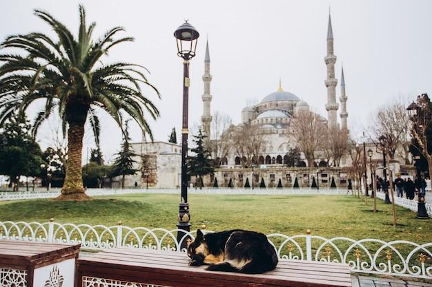 記念碑の前のベンチに犬
