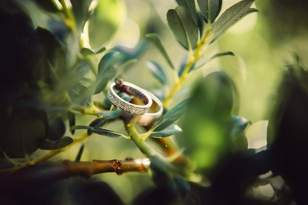 Обручальные кольца. украшения из белого и желтого золота. обручальное кольцо на зеленом