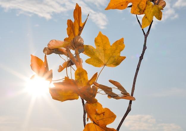 秋の詳細、葉、色、黄色、茶色、その他の直射日光
