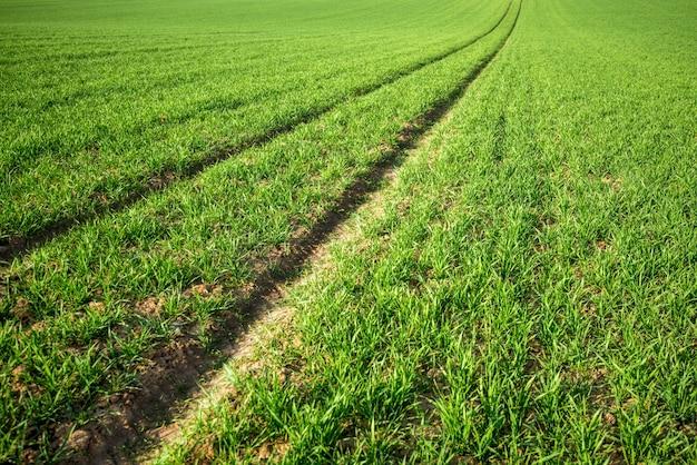 美しい牧草地