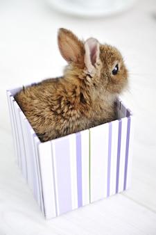 Кролик милый ребенок