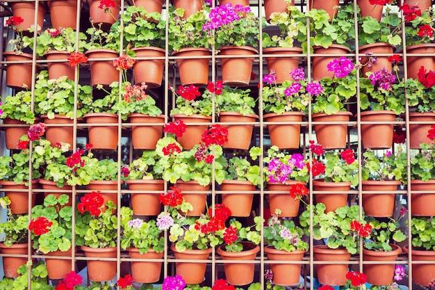 通りの家のファサードにぶら下がっている多くの開花陶器植物