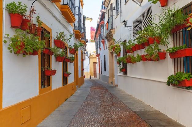 Цветы на улице кордова, андалусия, испания