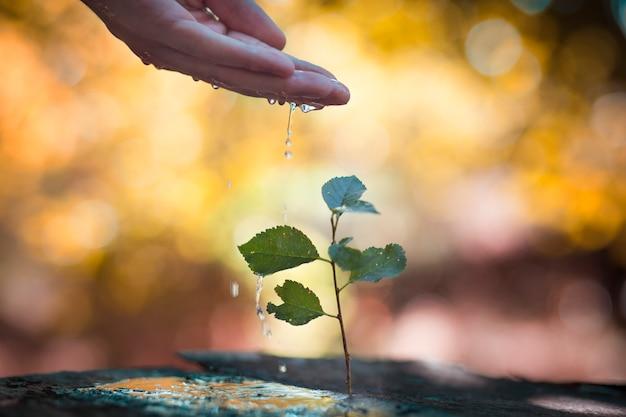 Ручной полив растений