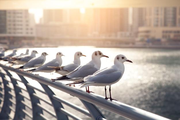 Чайки сидят на перилах у пляжа