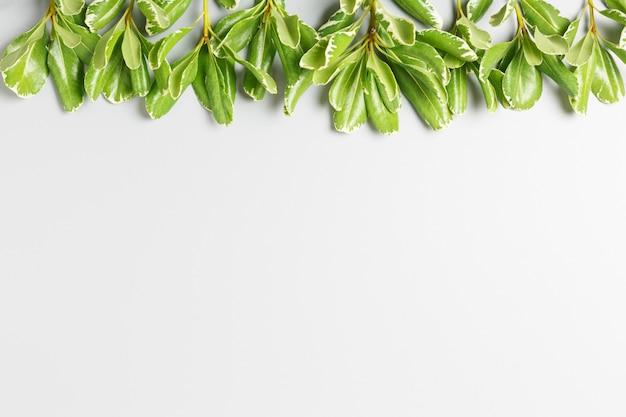 灰色の背景に緑の葉。コピースペース、夏の背景