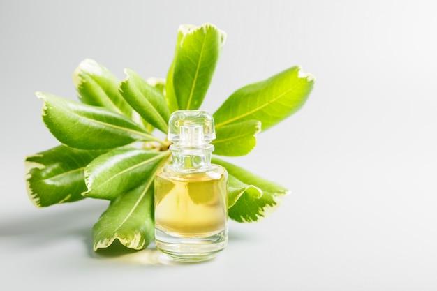 灰色の背景に香水と緑の葉。